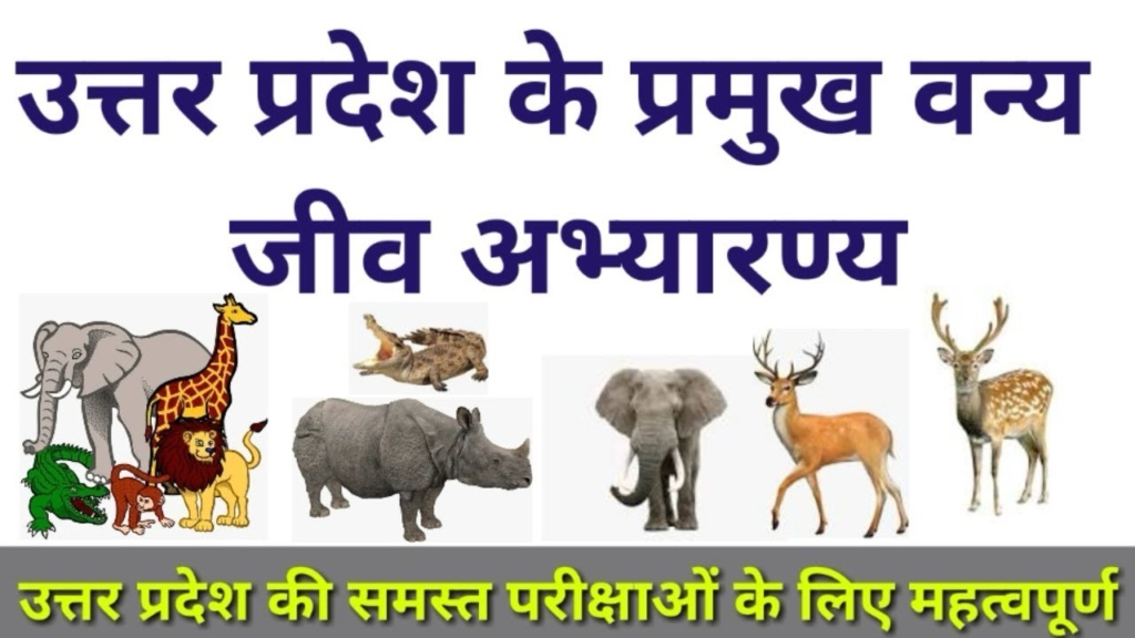Major Wildlife Sanctuaries in Uttar Pradesh
